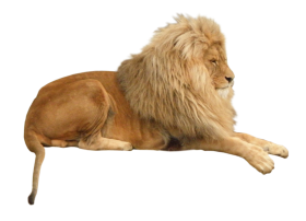 Lion Animal PNG