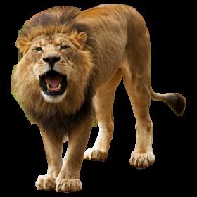 Lion PNG