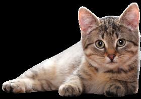 Lying Cat PNG PNG