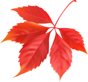 Red Maple Leaf PNG