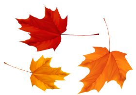 Red and Yellow Maple Leaves PNG