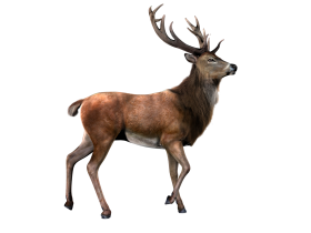 Moose Render PNG