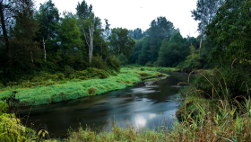 River in the Green Woods PNG
