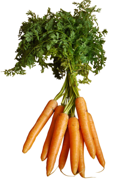 Orange Carrots with Stem PNG