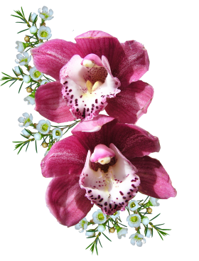 Orchid Flower PNG