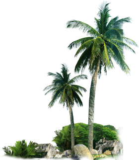Palm Trees by Rocks PNG