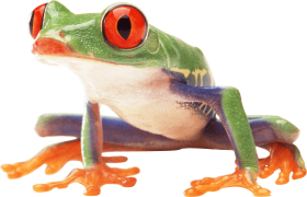 poisonous frog PNG