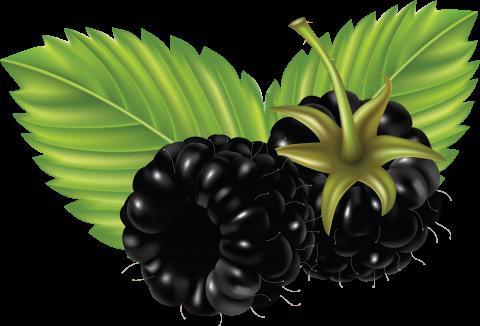 2 Blackberrys PNG