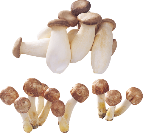 alot of Mushrooms PNG