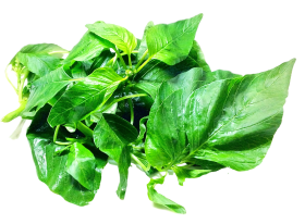 Amaranth Leaves PNG