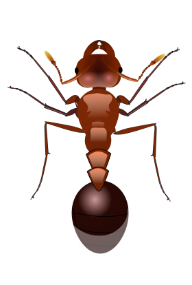 Ants PNG