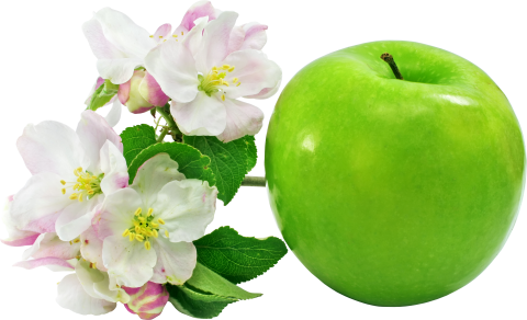 Apple with Flowers PNG
