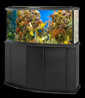 Aquarium Fish Tank PNG
