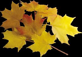 Autumn Leaf PNG