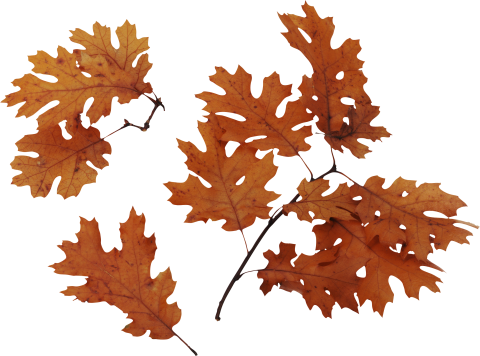 Autumn Leaves Brown PNG
