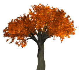 Big Autumn Tree PNG