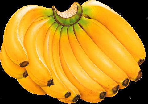 Banana Drawing PNG