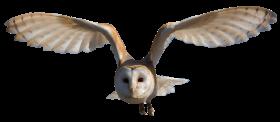 Barn Owl PNG