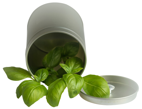 Basil Leaf Pot PNG
