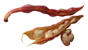 Beans PNG