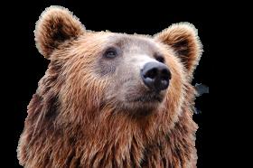 Bear Head PNG