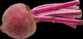 Beet PNG