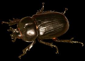 Beetle Bug PNG