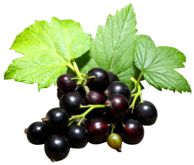 Black Currant PNG