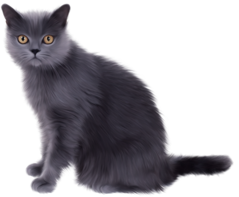 Black Sitting Cat PNG
