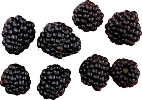 Blackberry Variations PNG