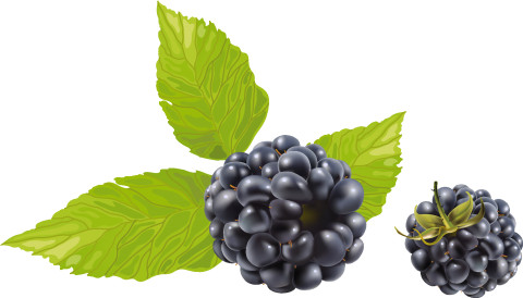 Blackberry with Leaves PNG