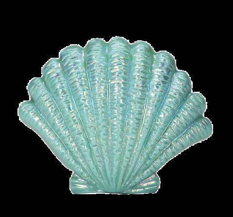 Nouveau monde et panique a bord ( Libre) Purepng.com-blue-seashellseashellshellblue-shell-4815211068544dprx