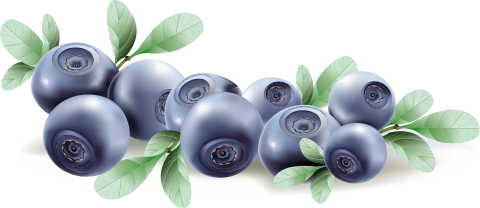 Blueberry Drawing PNG