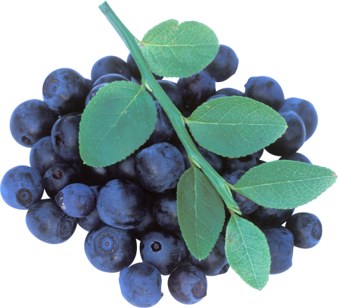 Blueberrys with Leaves PNG
