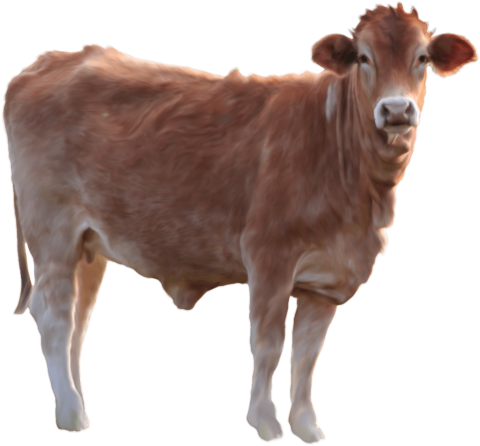 Brown Cow Standing PNG