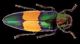 Bug PNG