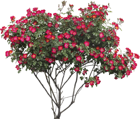 Bush with flowers PNG