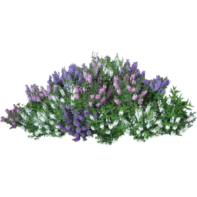 Bush with Pink Flowers PNG