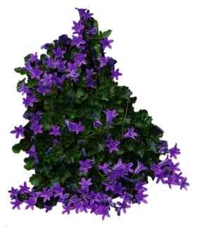 Bush with purple Flowers PNG