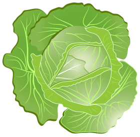 Cabbage PNG