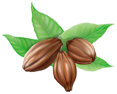 Cacao Beans PNG