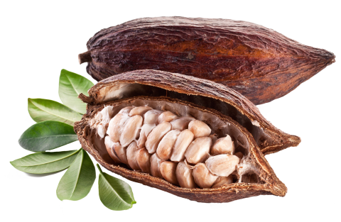 Cacao With Bones PNG