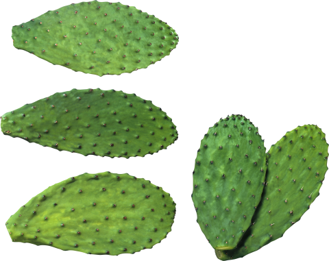 Cactus Plates PNG
