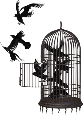Cage Bird Crow PNG