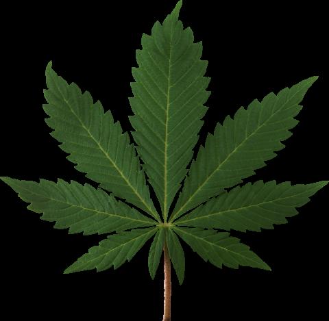 Cannabis Leaf PNG