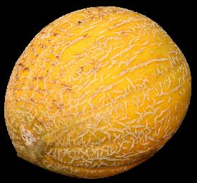 Cantaloupe Melon PNG