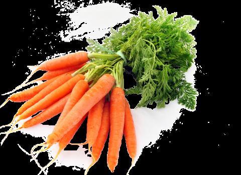Carrots PNG