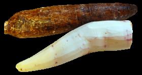 Cassava Peeled PNG