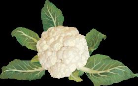 Cauliflower PNG