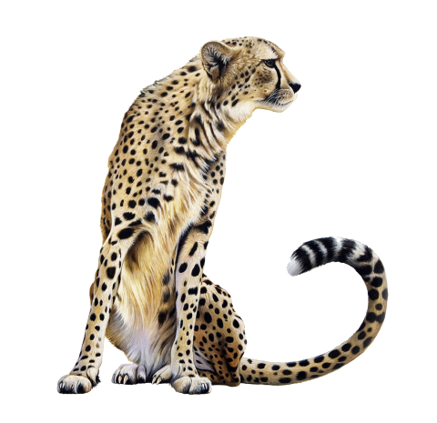 Cheetah Sitting PNG